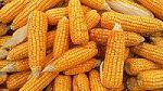 Ganz viel Mais!